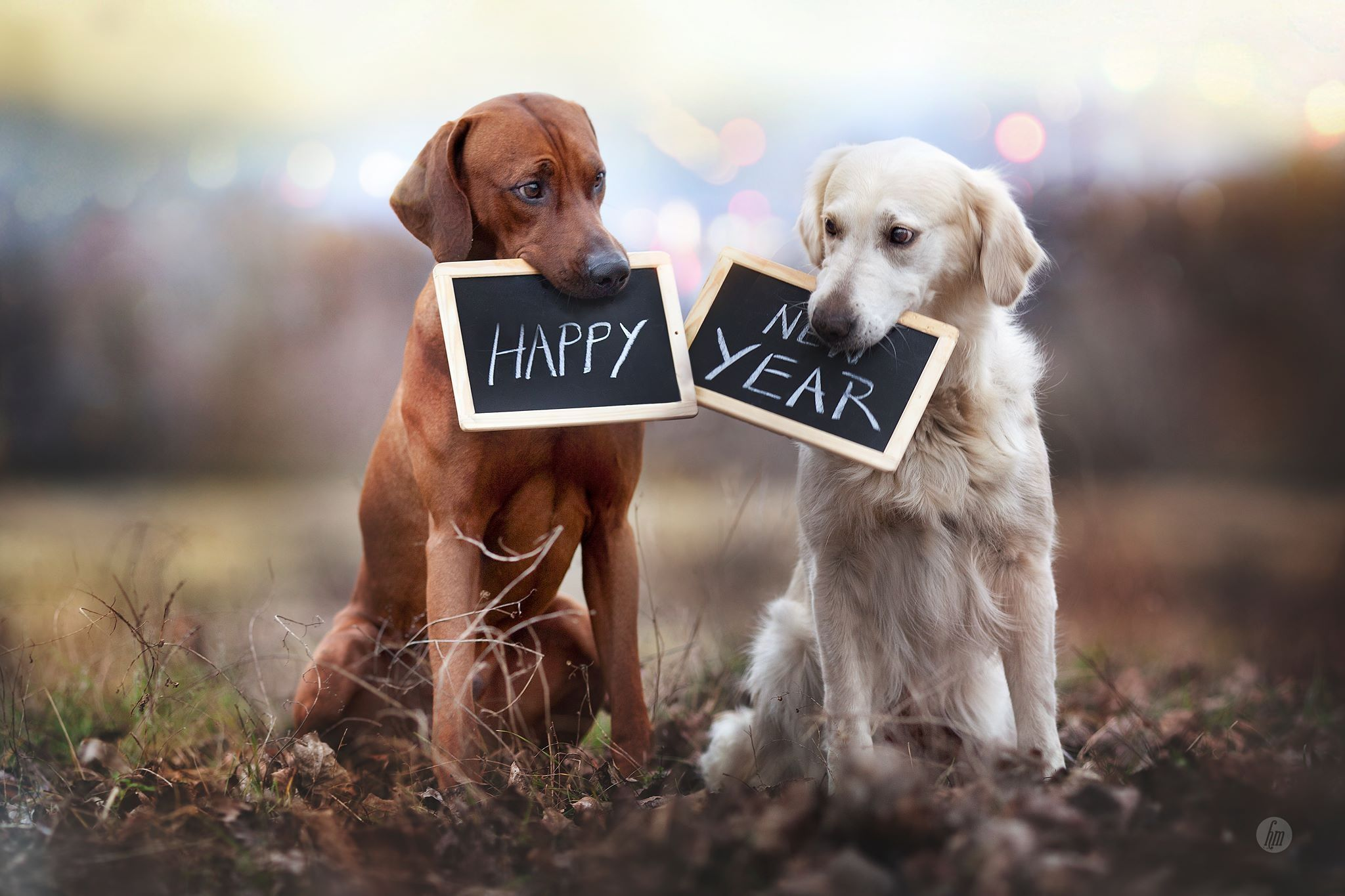 Facebook Love Photos Happy New Year 2019